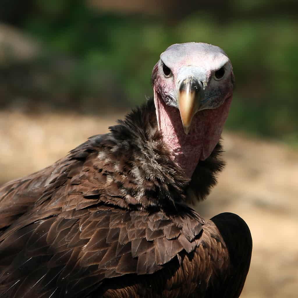 15-of-the-worlds-nastiest-animals-8