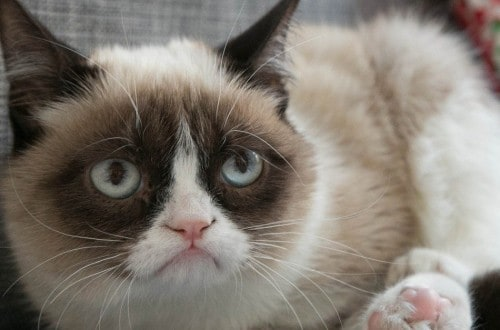 20 Signs That You're A Cat Person