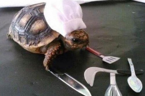 20 Turtles Pictures That Will Make You Laugh With Joy