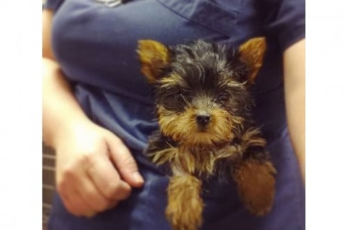 10 Adorable Reasons That Make Being A Vet Awesome