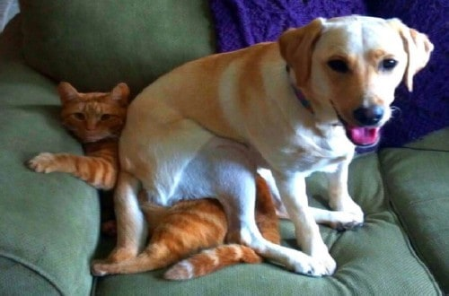 10 Hilarious Photos Showing Pets Have No Concept Of Personal Space