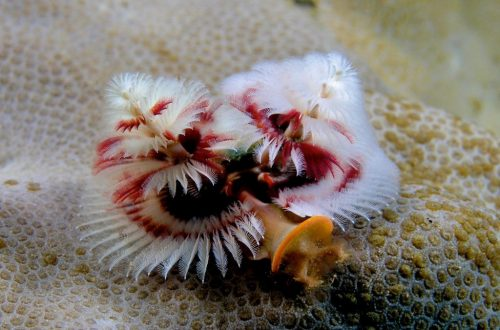 10 Of The Craziest Sea Creatures You'll Ever See